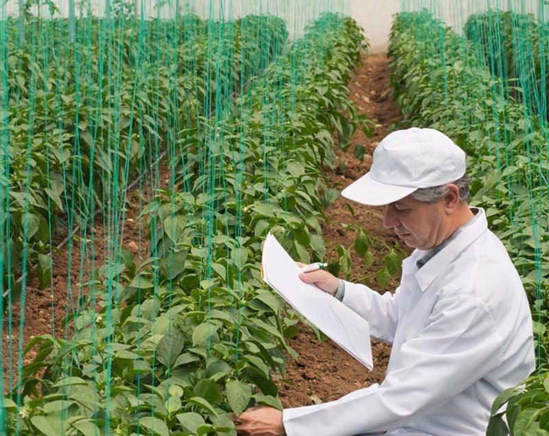 (5) Seleção e multiplicação de plantas aromáticas e medicinais com interesse comercial